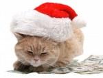 8319489-gatto-rosso-seduta-sul-dollaro-sullo-sfondo-bianco-natale-capodanno