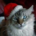 Gatos-y-visitas-navideñas