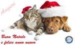 gatto_cane_natale_01